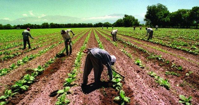 Peones rurales tendrán bono de fin de año