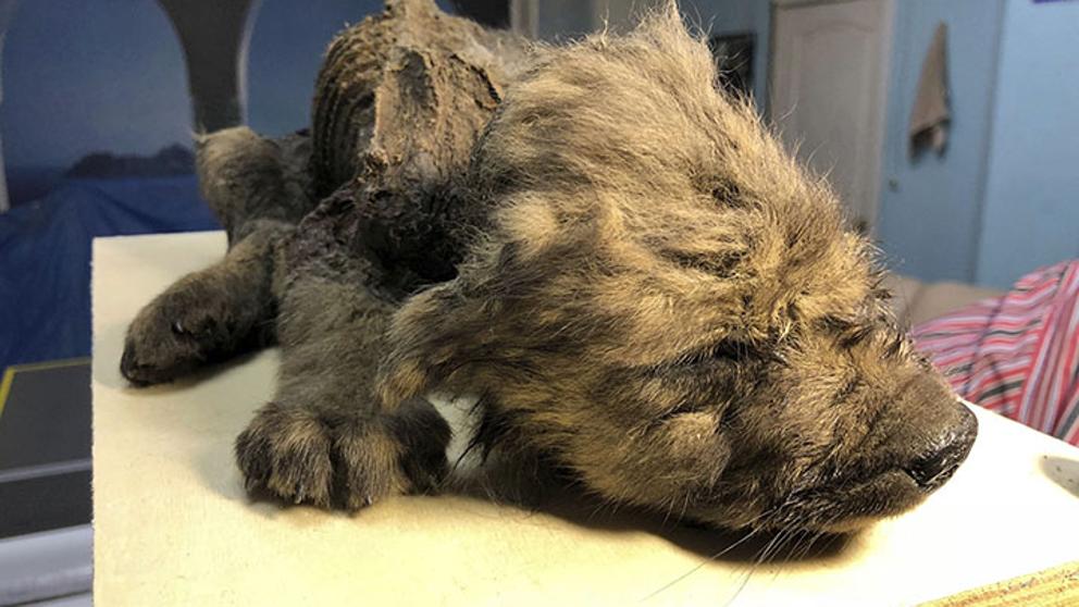El deshielo de Siberia pone en descubierto un animal desconocido