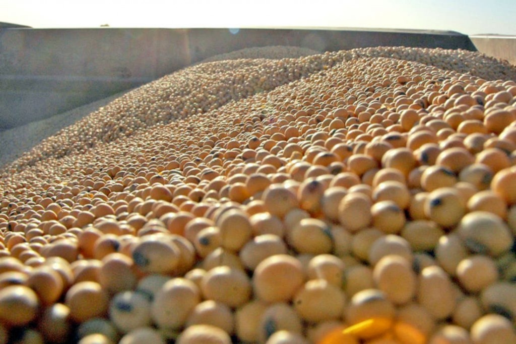 La soja subió casi 4%  y cotiza  u$s419,43 la tonelada
