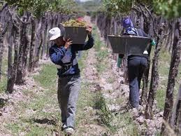Impulsan un plan de desarrollo vitivinícola