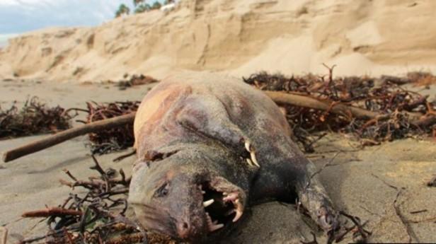 Conmoción en California por la aparición del cadáver de una extraña criatura