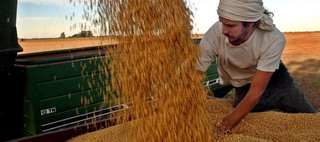 Instan a productores a aumentar la siembra de maíz y sorgo
