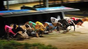 Macri promulgó la ley que prohíbe las carreras de galgos en el país