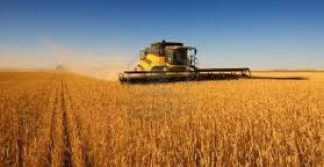 Finalizó cosecha de trigo en Entre Ríos con promedio de 3.200 kilos por ha.