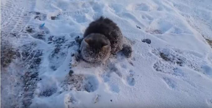 Dramático rescate de un gato que quedó pegado al piso por el frío