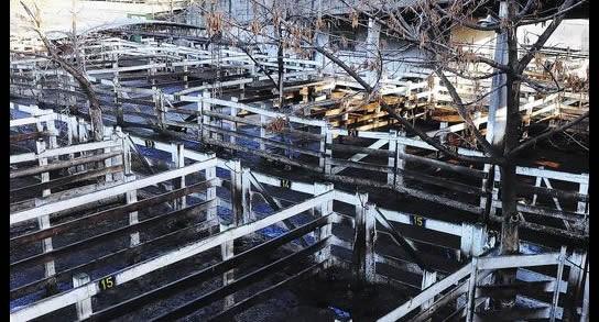 Mercado de hacienda se movió sin tendencia por remates especiales