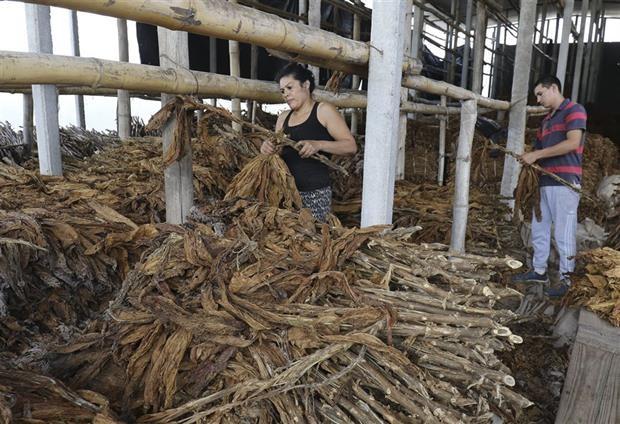 El sector tabacalero entre alerta y preocupación