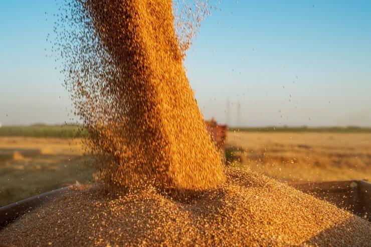 El Gobierno cerró las exportaciones de maíz